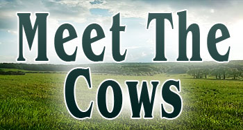 Meet The Cows